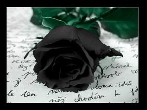 czarne róże goth