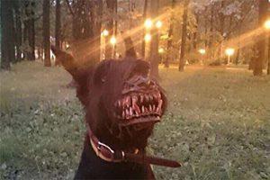 horrorowe, straszne gadżety - obroża wilkołaka